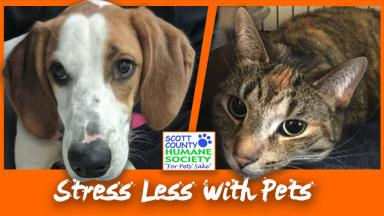 Study Break: Stress Less with Pets